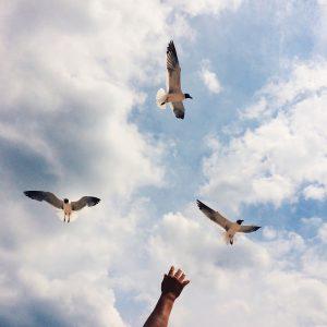 seagulls-598184_960_720